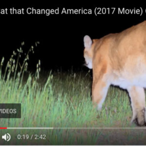 VIDEO | P-22 Makes His Movie Debut!