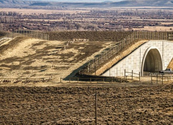 The Wall Street Journal | Wildlife Crossings Get a Whole New Look