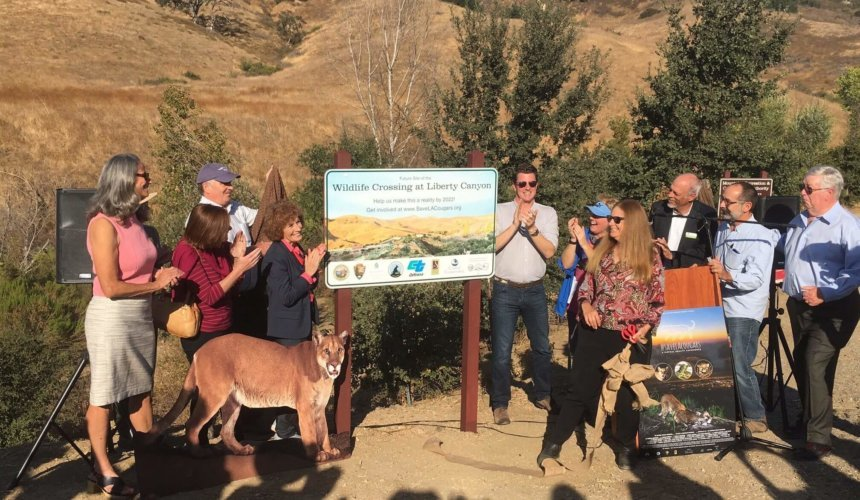 The Week | Mountain lions and other wildlife will soon be roaming above a busy L.A. freeway