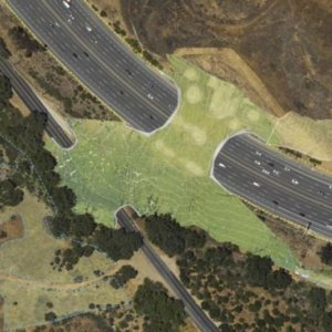 The Asian Age | California to build wildlife crossing over major highway