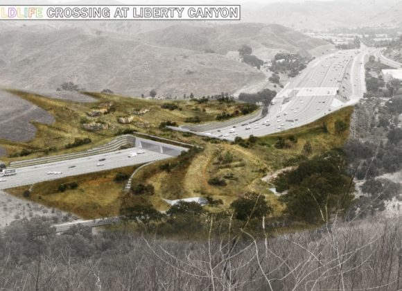 CBS Los Angeles   Campaign To Build Wildlife Crossing Over 101 Freeway Raises $18 Million; Groundbreaking Within Sight
